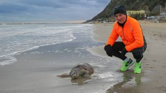 Il mare spiaggia tartarughe