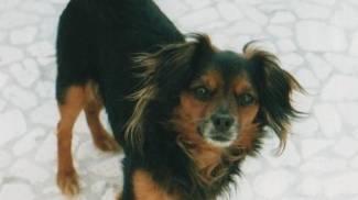 """Il cane muore, denunciato il veterinario: """"Gli ha tolto tutti i denti senza motivo"""""""