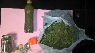 Coltiva droga in casa, arrestato ventenne