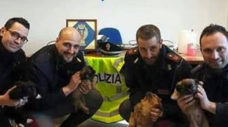 Sequestrati 4 cuccioli di cane con documenti falsi