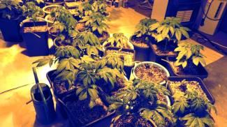 Marijuana a chilometri zero, arrestato 26enne
