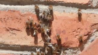 Punto da venti vespe, operaio in ospedale